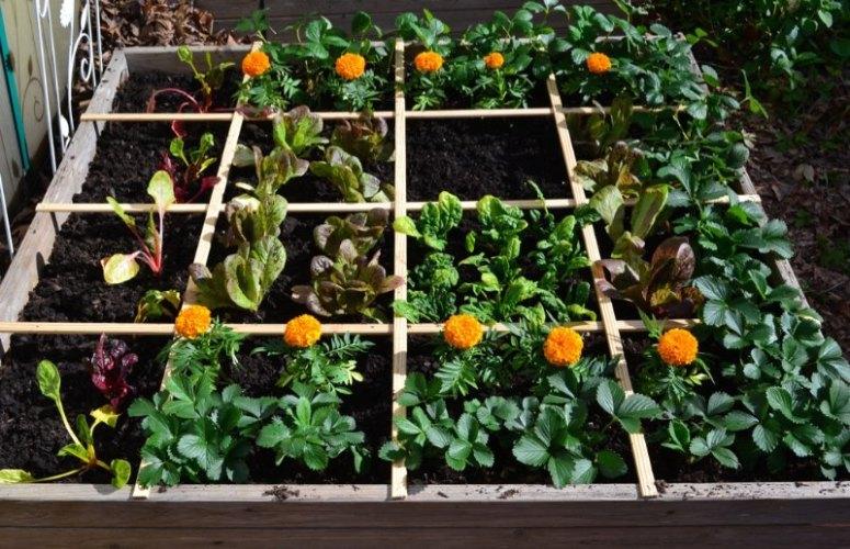 一米菜园 Square Foot Gardening