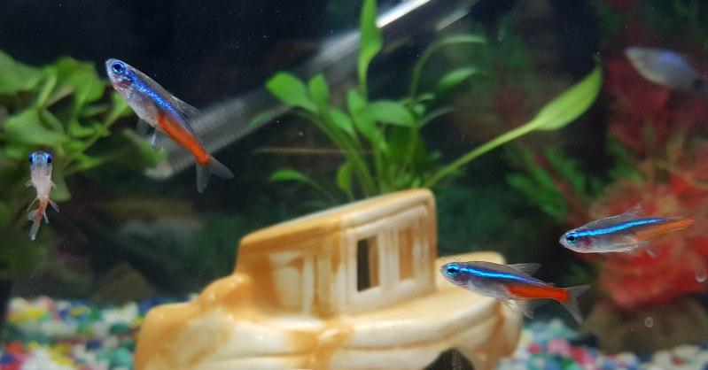 Filling your first tropical neon tetra fish tank aquarium setup. Wayne's AquaWorld