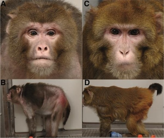 J. Colman , M. Anderson , C. Johnson et al.: Caloric Restriction Delays Disease Onset and Mortality in Rhesus Monkeys, Science 325 , 201-204 , 2009