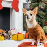 8 Dogs In Christmas Sweaters To Make Everyone Feel Warm Cozy