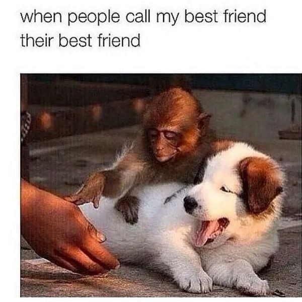 Funny Pictures Best Friends