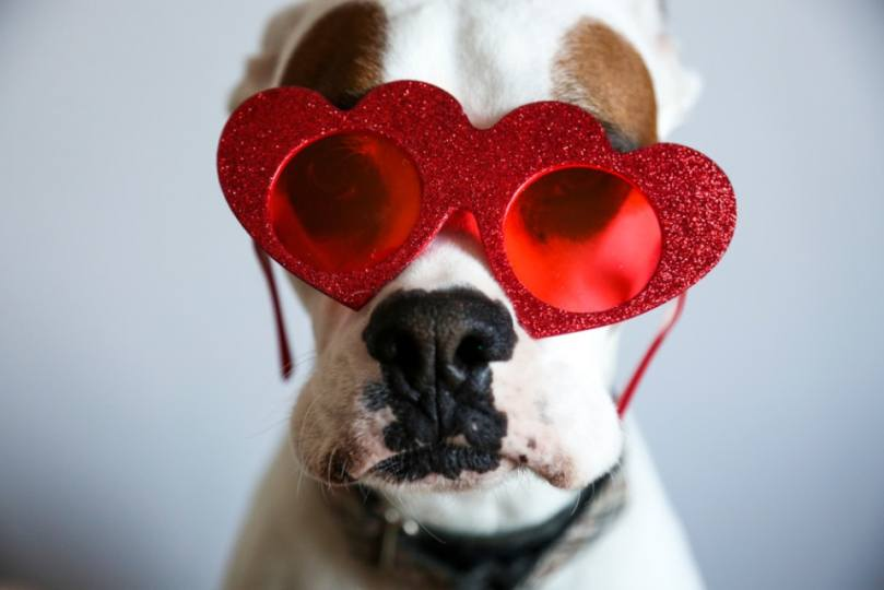 10 Valentine's Day Dog Names That Are Perfect For Your New ...