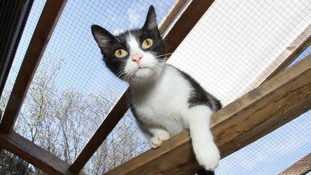 In Gehegen genießen die Katzen gesichert Sonne und Luft. (Bild: Christian Jauschowetz)