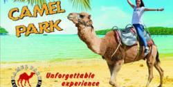 Забавление край Несебър! Вход за атракционен парк с камили, беседа и хранене на животните
