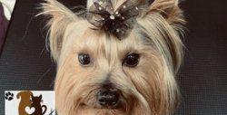 За кучето! Къпане, изсушаване, разресване, подрязване на нокти и почистване на уши или цялостен груминг