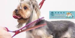 Къпане, разресване, изсушаване и почистване на лапички или цялостен грууминг за куче