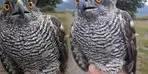 Tavuklarına musallat olan yırtıcı kuşu eliyle yakaladı