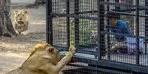 Antalya'da tepki çeken görüntü! İçeride 11 aslan var
