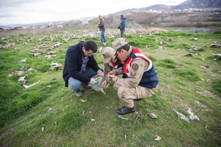Tokat'ta terk edilmiş bir arazide yüzlerce hayvan kafatası bulundu