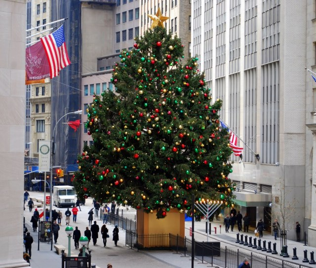 O Christmas Tree Where To See The Biggest Evergreens Around The City