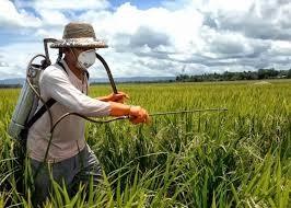 Dissertao de mestrado derruba mito do uso seguro de agrotxicos