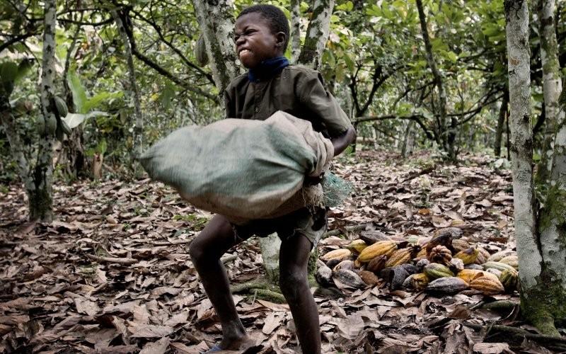 Pascoa Conhea as sete marcas de chocolate que utilizam trabalho escravo infantil