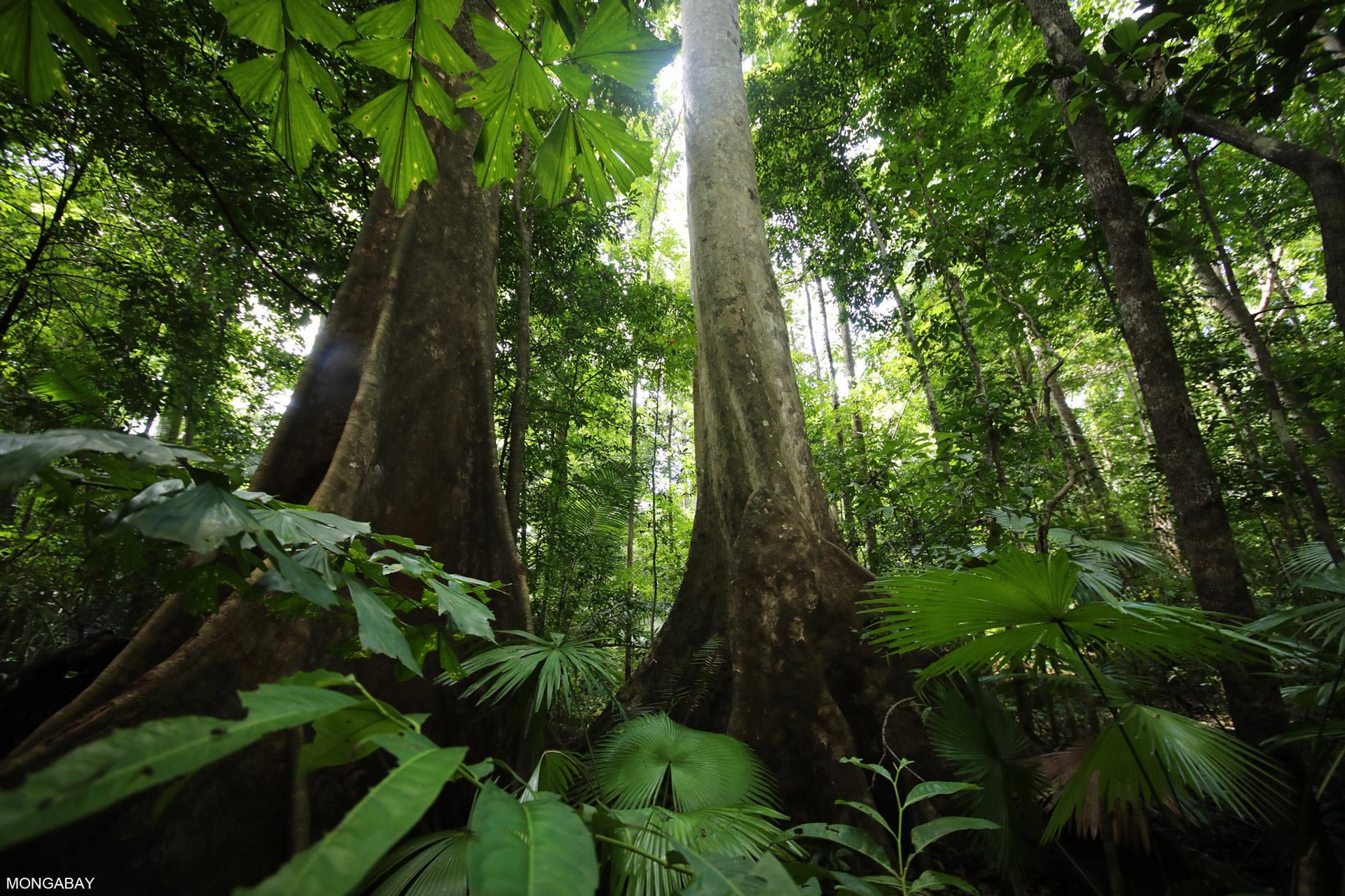 Rainforests The Year In Review