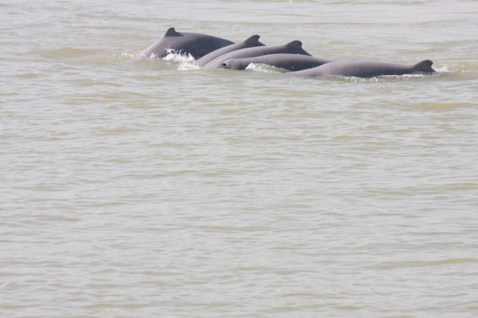 Myanmar expands protected area for rare Irrawaddy dolphin