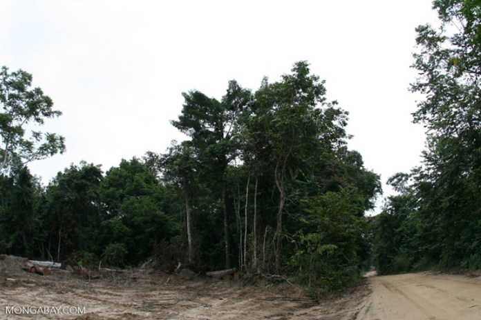 A logging road and cleared forest in the Central African country of Gabon. Image by Rhett A. Butler/Mongabay.