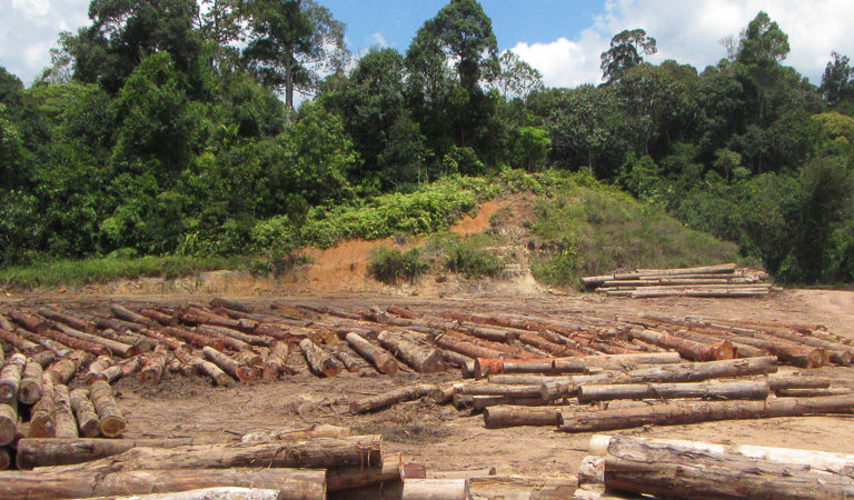 Illegal hunting a greater threat to wildlife than forest degradation