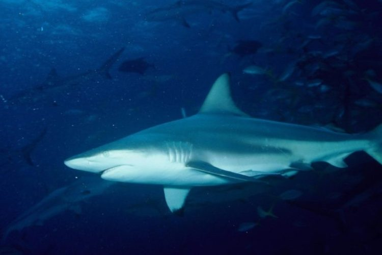 Sharks nearby? A bottle of seawater can hold the answer, study says