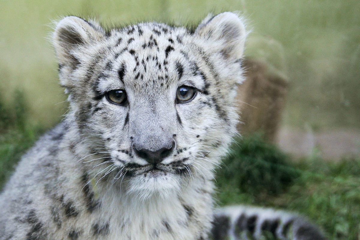 Study highlights 'terrible' signs of species decline from wildlife trade