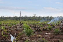 'We attack,' Indonesia declares in joint bid with Malaysia to shield palm oil