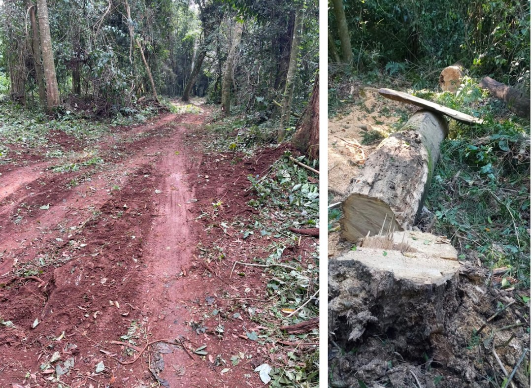 A new road pierces San Rafael forest. Image used with permission from anonymous source.