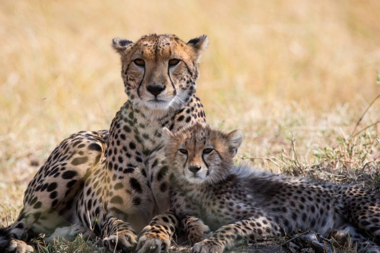 Unregulated by U.S. at home, Facebook boosts wildlife trafficking abroad