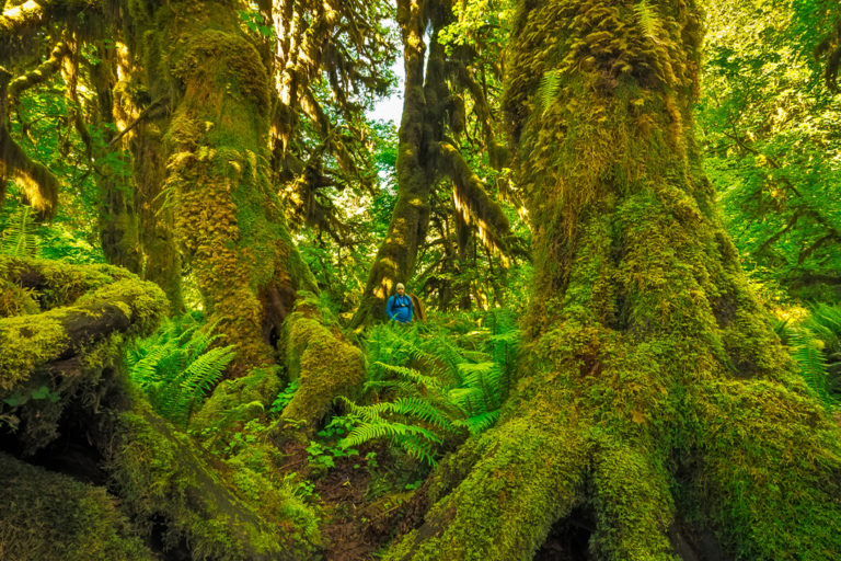 Map of biome abiotic and biotic factors food chain & Conservation News On Temperate Forests