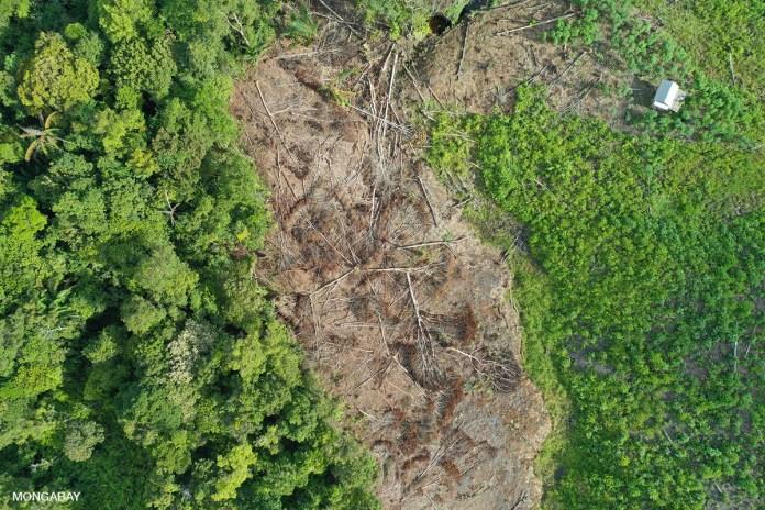smallscale deforestation