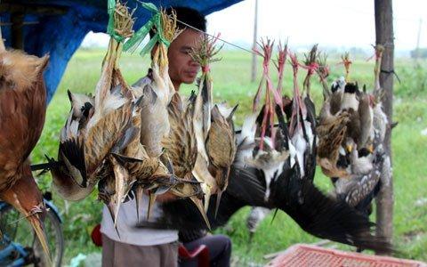Công khai 'thảm sát' chim trời trên quốc lộ