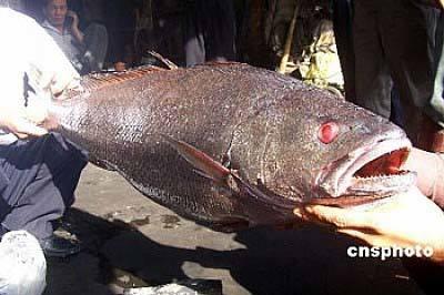 Nông dân, Thái Bình, cá khủng