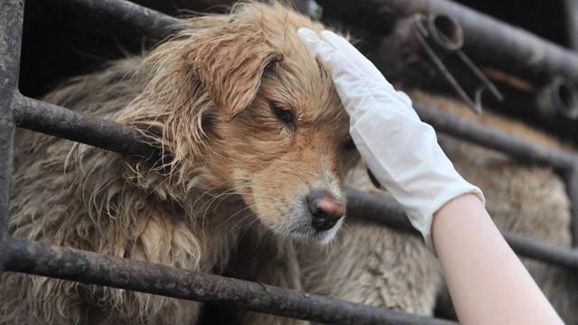 thịt chó, ăn thịt chó, giết chó, văn hóa, tranh cãi, quán nhậu, dân nhậu, Việt Nam, Hàn Quốc, thịt-chó, ăn-thịt-chó, giết-chó, văn-hóa, tranh-cãi, quán-nhậu, dân-nhậu, Việt-Nam, Hàn-Quốc
