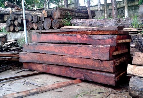 gỗ quý hiếm, kiểm lâm, phá rừng, đắc nông, Nâm Nung, chảy máu rừng
