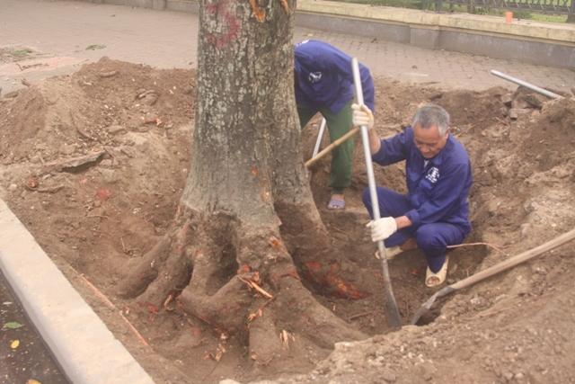 Ấn tượng trong tuần, chặt cây, 6.700 cây, văn hóa, Kỳ Duyên, Hà Nội, tượng đài