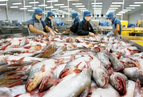 cá basa, xuất khẩu, thủy sản, sang Mỹ, bị kiện, phá giá, nhập khẩu, cá-basa, xuất-khẩu, thủy-sản, sang-Mỹ, bị-kiện, phá-giá, nhập-khẩu,