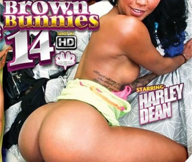Brown Bunnies Vol 14