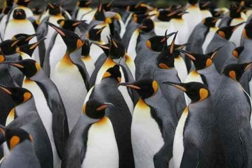 Cientistas argentinos descobriram fósseis de um pinguim de dois metros de altura que viveu na Antártida há 34 milhões de anos. (File Marcel Mochet/AFP Photo)