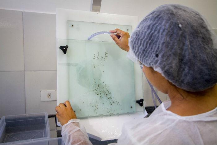 O laboratório funciona no Controle de Zoonoses (CVA) do Recife. Foto: Leo Malafaia/Esp.DP.