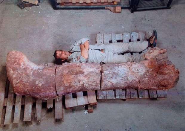 Técnico posa para foto ao lado do fêmur do dinossauro  no museu Egidio Ferugli na cidade de Trelew  (REUTERS/Maxi Jonas )