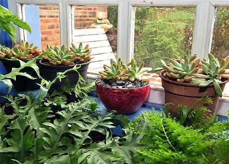 Plantas dentro de casa em pequenos vasos demandam atenção especial (Eduardo de Almeida/RA Studio)