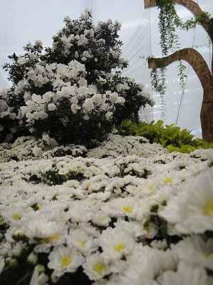 No último trecho do jardim, muita luz e claridade, com bela música barroca e o abuso de margaridas: perfumes agradáveis e formas orgânicas finalizam o ciclo sensorial (Raul Cânovas Paisagismo/Divulgação)