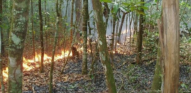 Laboratório da Nasa analisa incêndios na Amazônia que duram semanas e afetam a biodiversidade da região