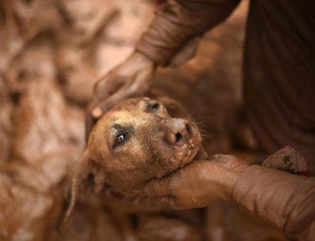 Bombeiro resgata cadela de dentro da lama em Paracatu de Baixo, em Mariana (MG)
