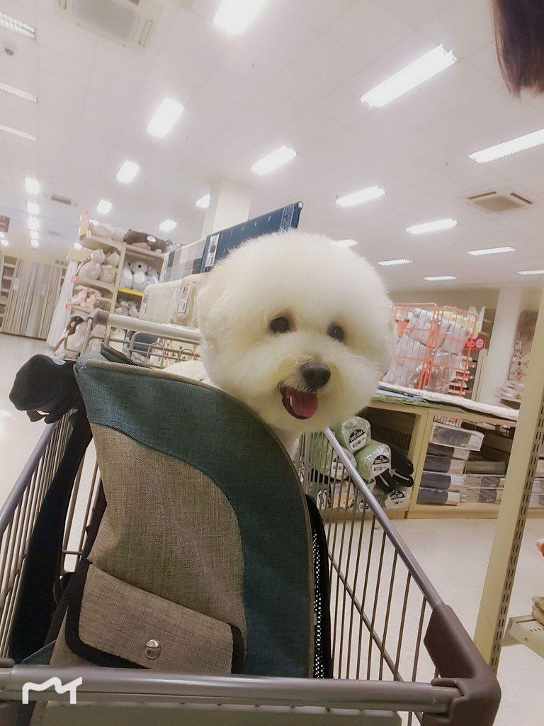 #問#臺南狗狗皮膚推薦動物醫院 - 寵物板   Dcard