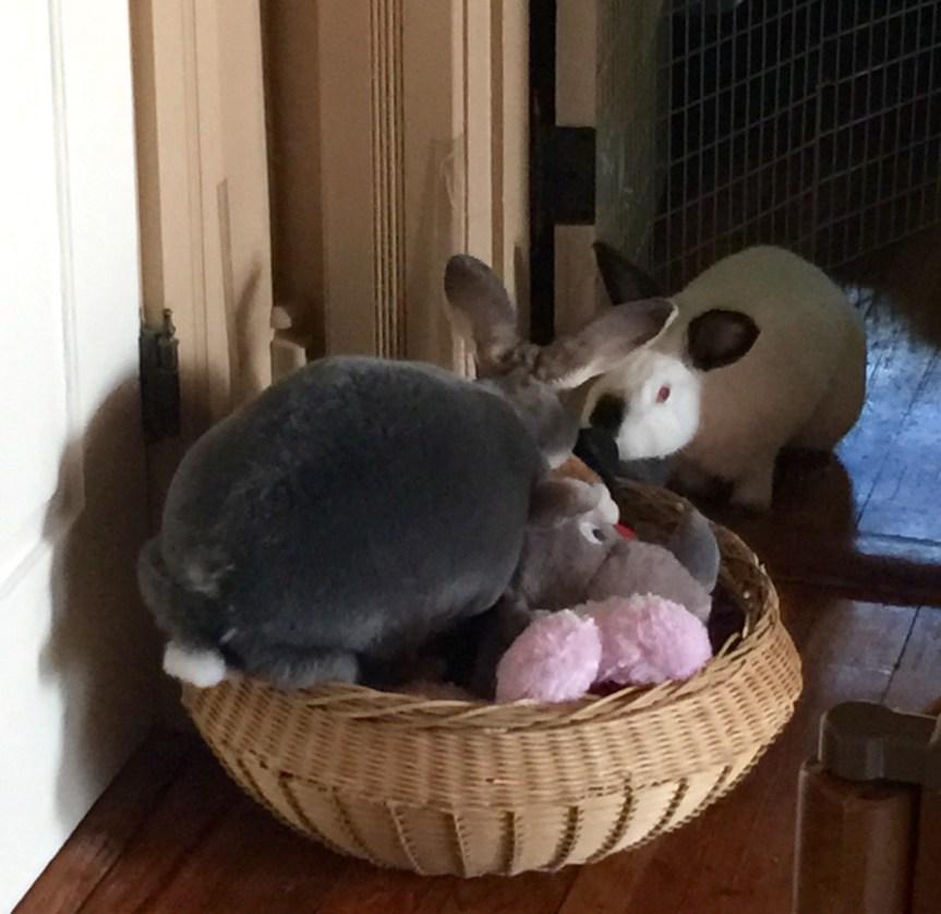 The Best Laid Plans of Bunnies & Men
