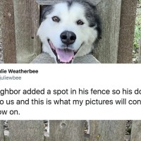 12 Hilarious Tweets For the Dog Lovers in Your Life
