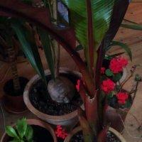 Vinterbeskyttelse...af eksotiske planter