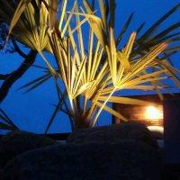 5 hurtige vinter råd om Hørpalmer