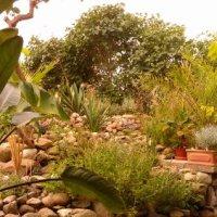 Paradisfugleblomst…ugens eksotiske blomst