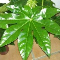 Pssst...min yndlings jungleplante er på tilbud i Bilka