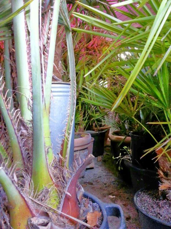 et kig ind i mine palmers vinterhi
