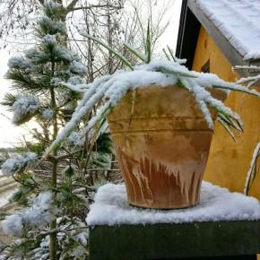 Yucca og lidt sne i haven © iminhave.dk